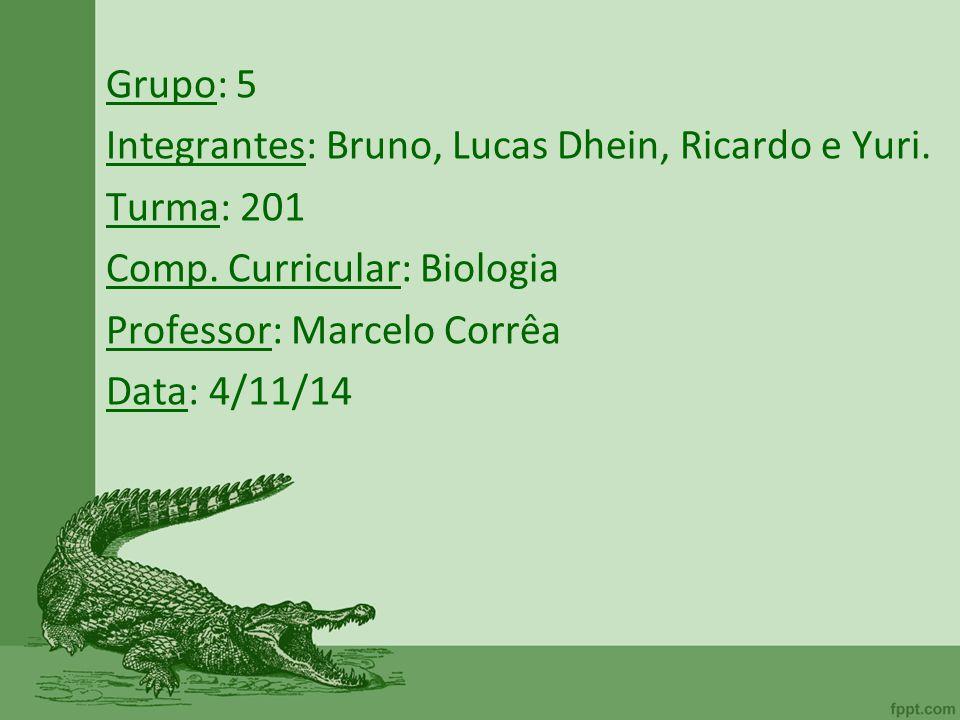 Grupo: 5 Integrantes: Bruno, Lucas Dhein, Ricardo e Yuri. Turma: 201 Comp. Curricular: Biologia Professor: Marcelo Corrêa Data: 4/11/14