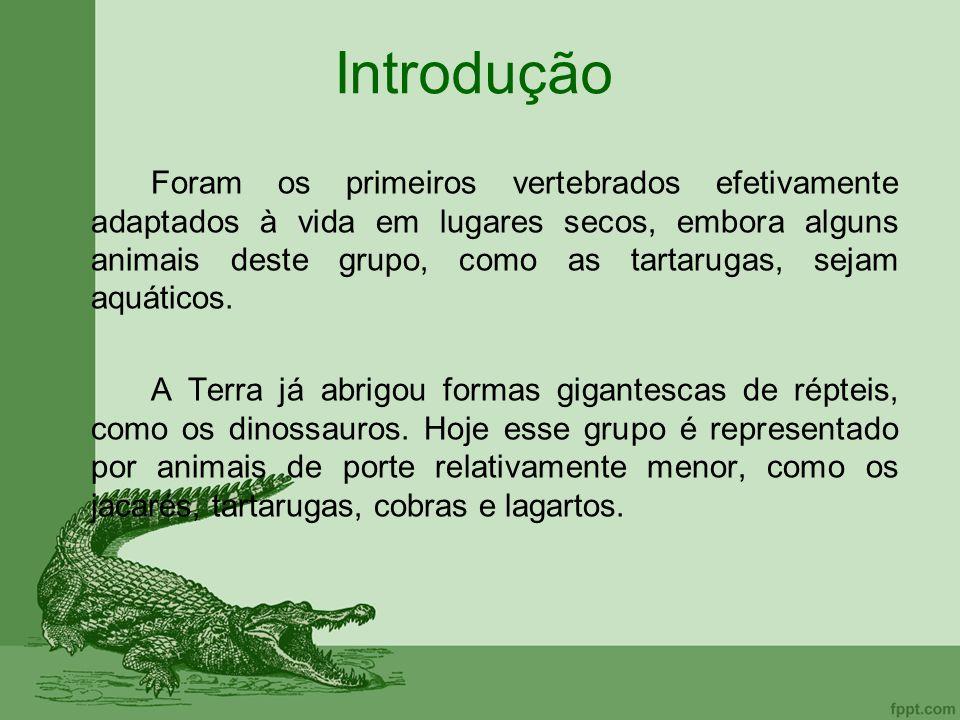 Introdução Foram os primeiros vertebrados efetivamente adaptados à vida em lugares secos, embora alguns animais deste grupo, como as tartarugas, sejam