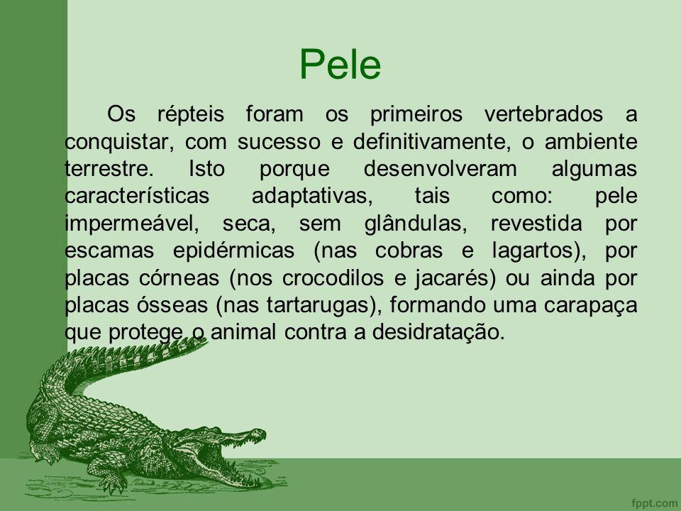 Pele Os répteis foram os primeiros vertebrados a conquistar, com sucesso e definitivamente, o ambiente terrestre. Isto porque desenvolveram algumas ca