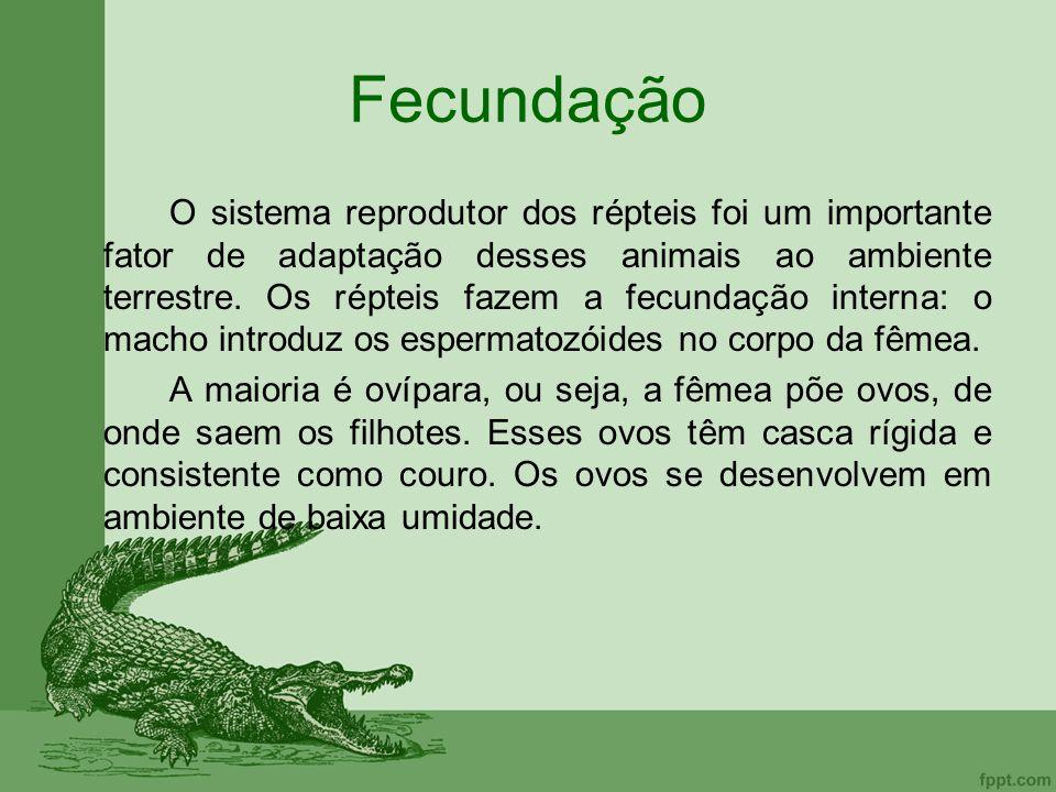 Fecundação O sistema reprodutor dos répteis foi um importante fator de adaptação desses animais ao ambiente terrestre. Os répteis fazem a fecundação i