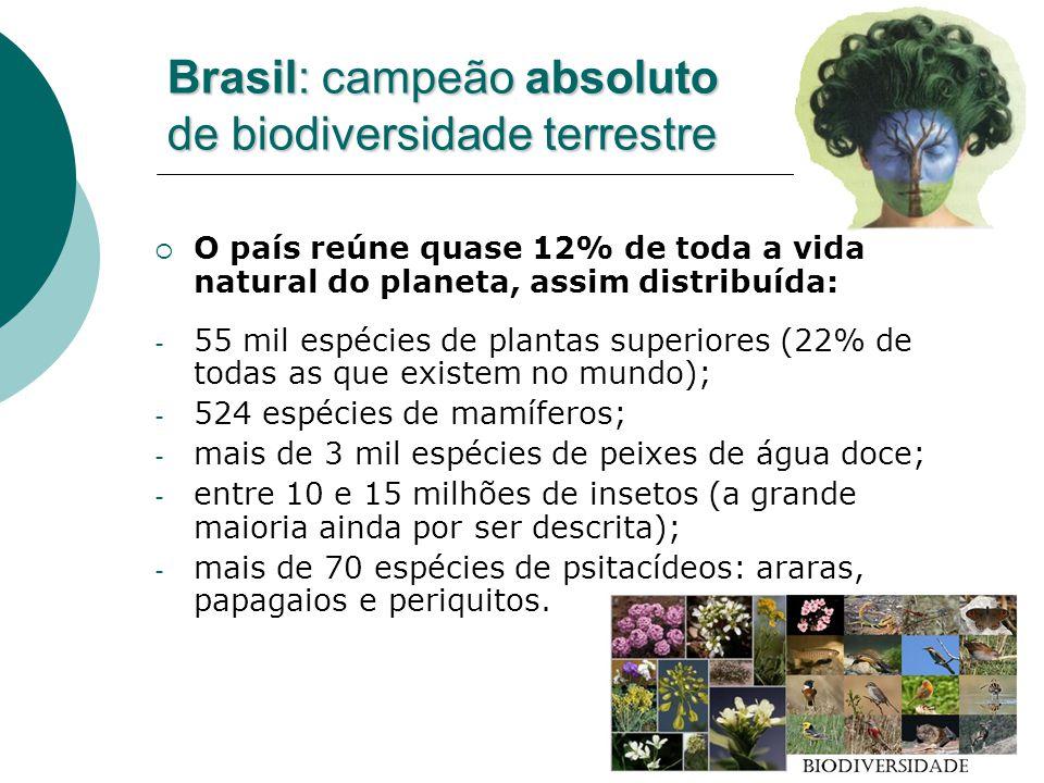 A biodiversidade amazônica - A região armazena 20% da água dos rios do Terra; - Sua área corresponde a 40% das florestas tropicais remanescentes no planeta; - Estimativas das espécies vegetais e animais conhecidas na Amazônia: - 300 a 353 espécies de mamíferos; - 950 a 1 mil espécies de pássaros; - 55 a 60 mil espécies de plantas, sendo 5 mil só de árvores; - 2.500 a 3.000 espécies de peixes; - 100 variedades de anfíbios; - 30 milhões de espécies de insetos; - milhões de invertebrados.