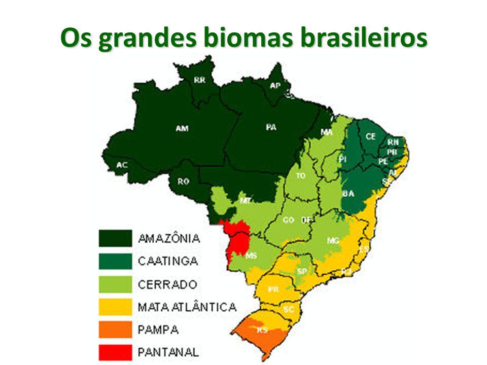 Caatinga A área original da Caatinga, segundo a delimitação do IBGE (2004) é de 844.453 km² e está situada no interior do Nordeste e norte de Minas Gerais, cobrindo 9,92% do território nacional – região do Polígono da Seca (Sertão); Causas do desmatamento: transformação da vegetação em lenha e carvão (pólos gesseiro e cerâmico do Nordeste e setor siderúrgico do Sudeste), plantio de oleaginosas para biocombustíveis e pecuária bovina;
