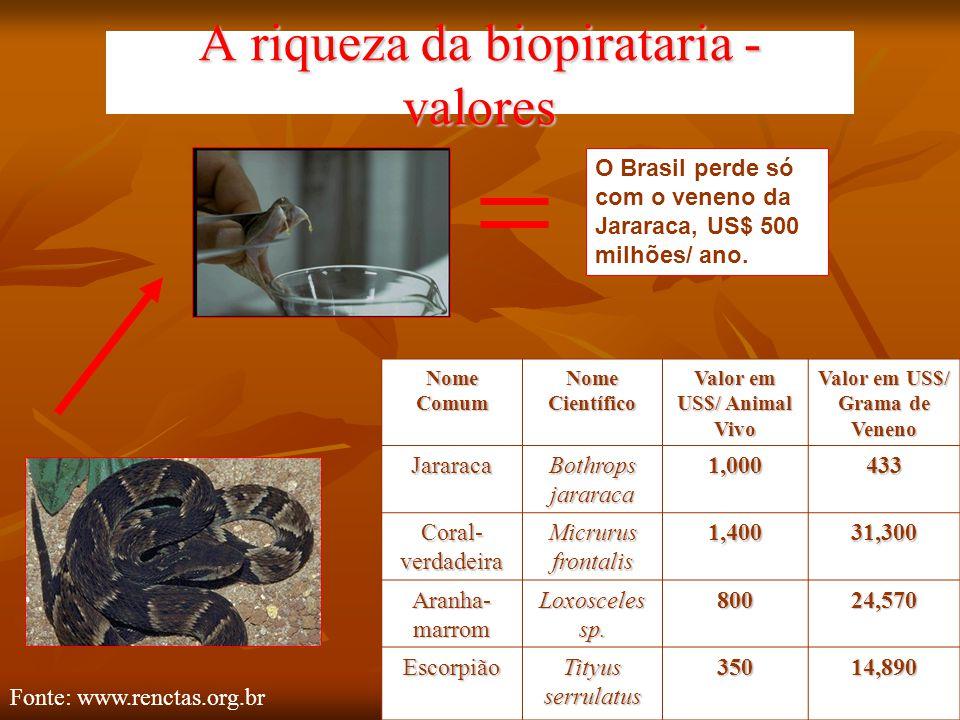 A riqueza da biopirataria - valores O Brasil perde só com o veneno da Jararaca, US$ 500 milhões/ ano. Nome Comum Nome Científico Valor em US$/ Animal