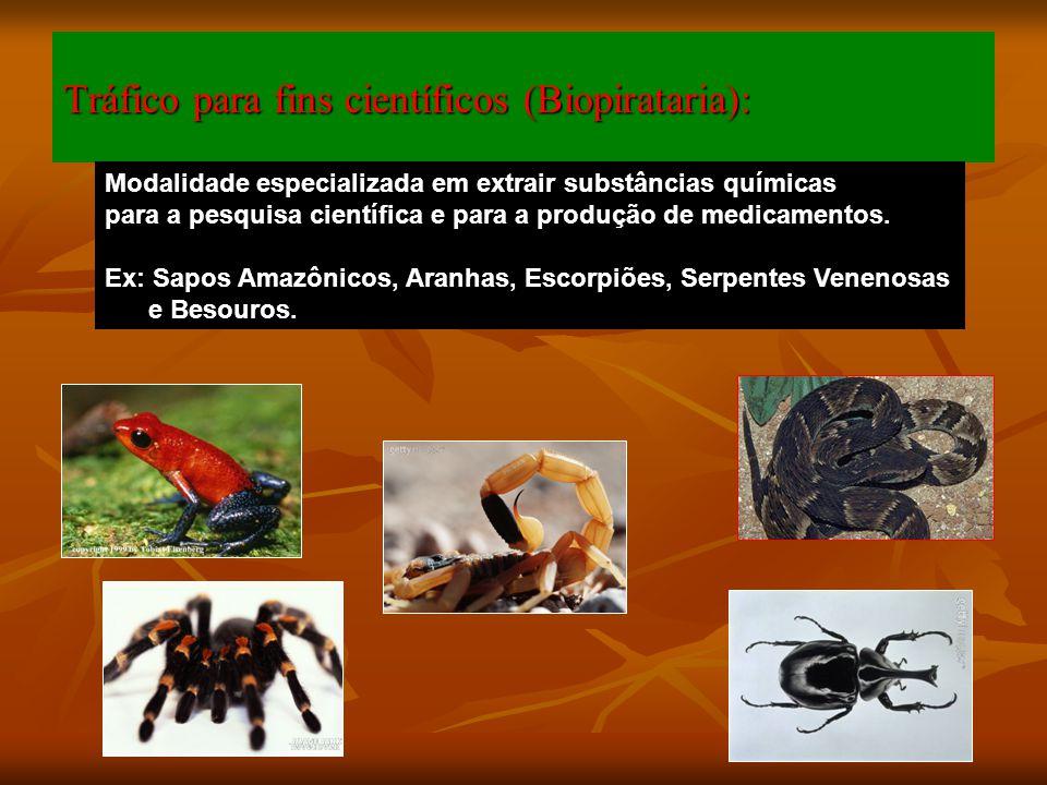 Tráfico para fins científicos (Biopirataria): Modalidade especializada em extrair substâncias químicas para a pesquisa científica e para a produção de
