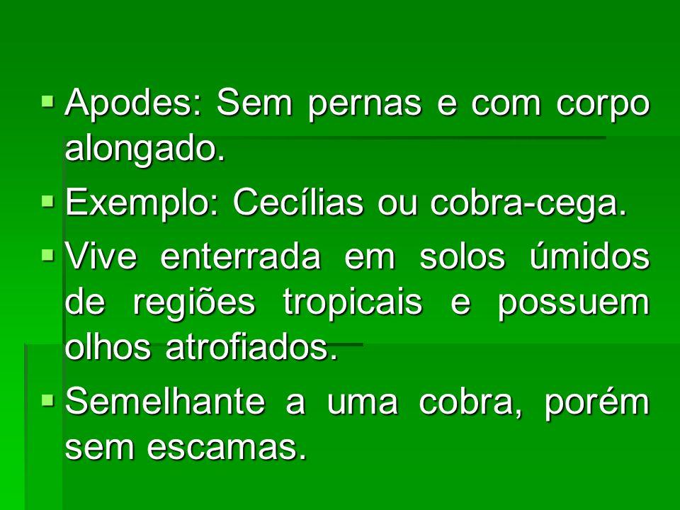  Apodes: Sem pernas e com corpo alongado.  Exemplo: Cecílias ou cobra-cega.  Vive enterrada em solos úmidos de regiões tropicais e possuem olhos at