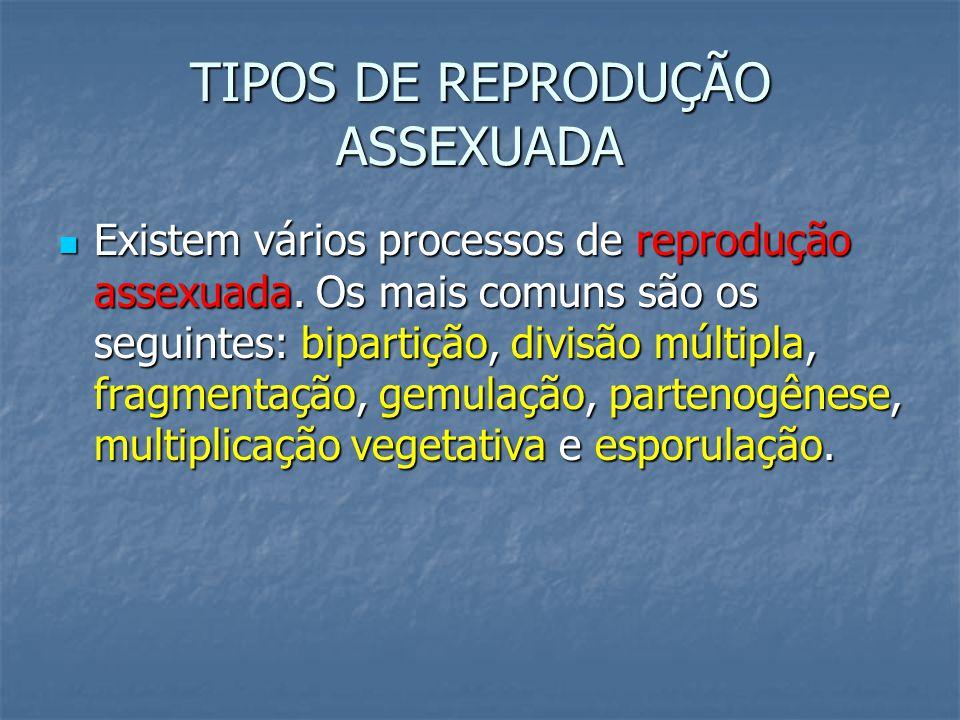TIPOS DE REPRODUÇÃO ASSEXUADA Existem vários processos de reprodução assexuada.