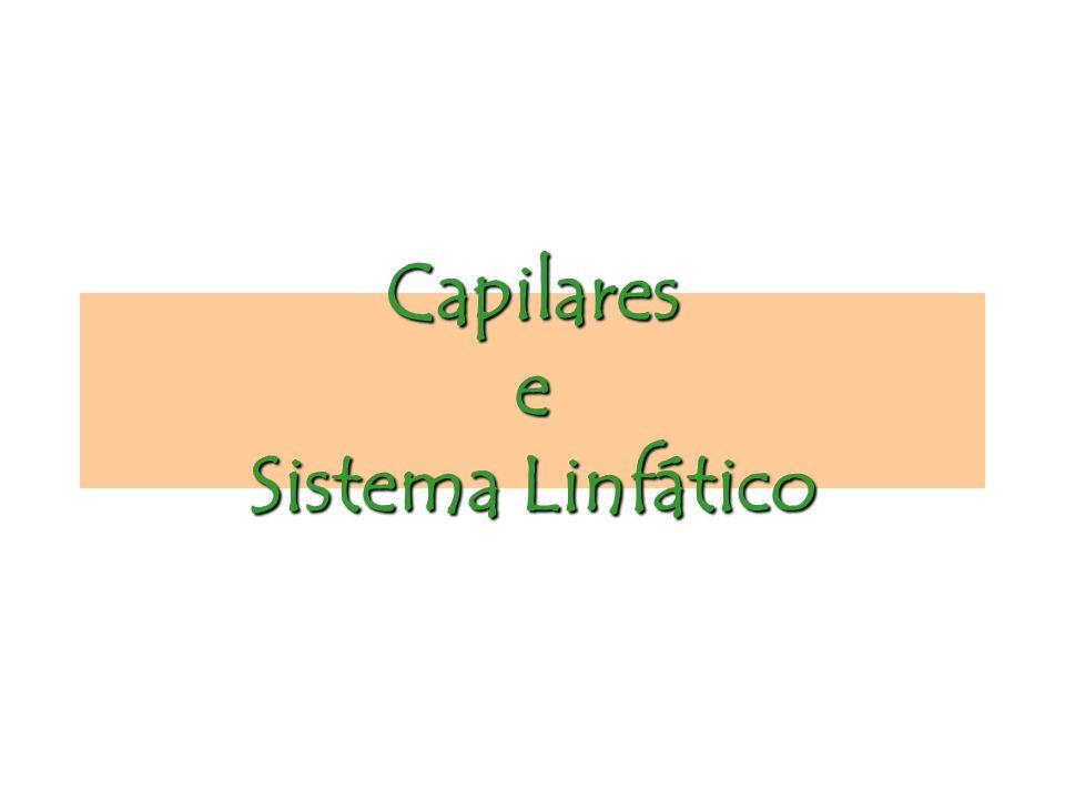 Capilares e Sistema Linfático