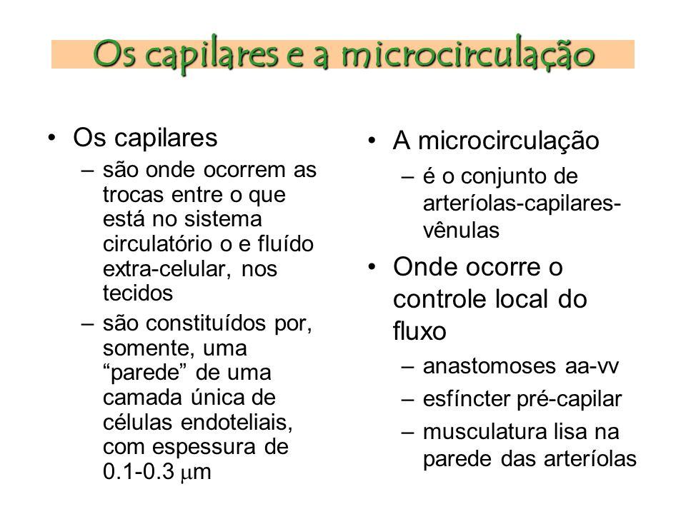Os capilares e a microcirculação Os capilares –são onde ocorrem as trocas entre o que está no sistema circulatório o e fluído extra-celular, nos tecidos –são constituídos por, somente, uma parede de uma camada única de células endoteliais, com espessura de 0.1-0.3  m A microcirculação –é o conjunto de arteríolas-capilares- vênulas Onde ocorre o controle local do fluxo –anastomoses aa-vv –esfíncter pré-capilar –musculatura lisa na parede das arteríolas