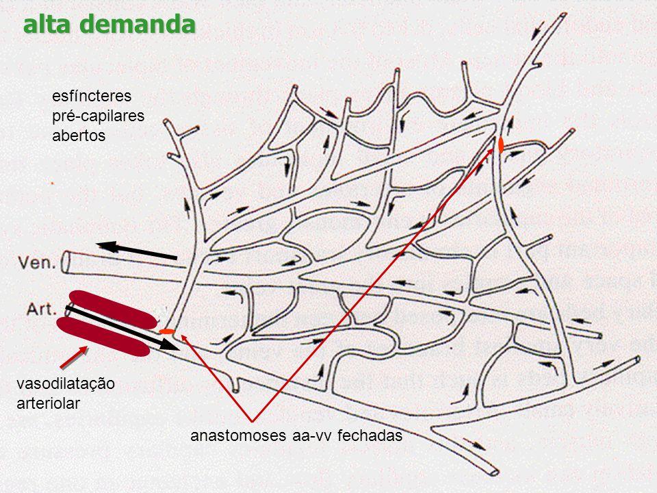 baixa demanda vasoconstrição arteriolar anastomoses aa-vv abertas esfíncteres pré-capilares fechados
