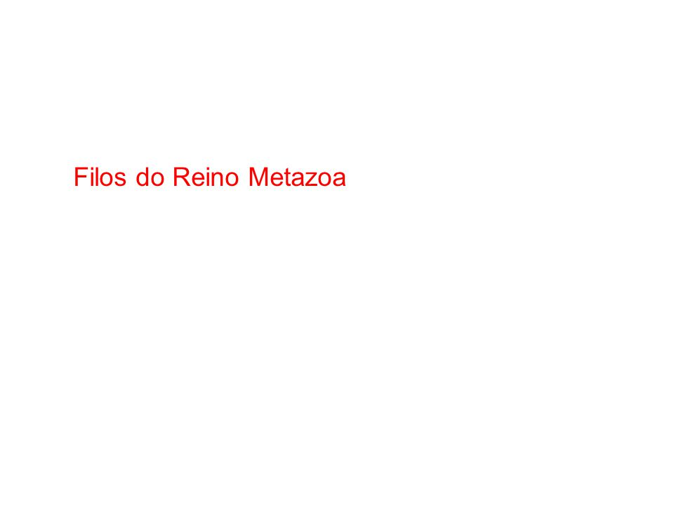 Filos do Reino Metazoa