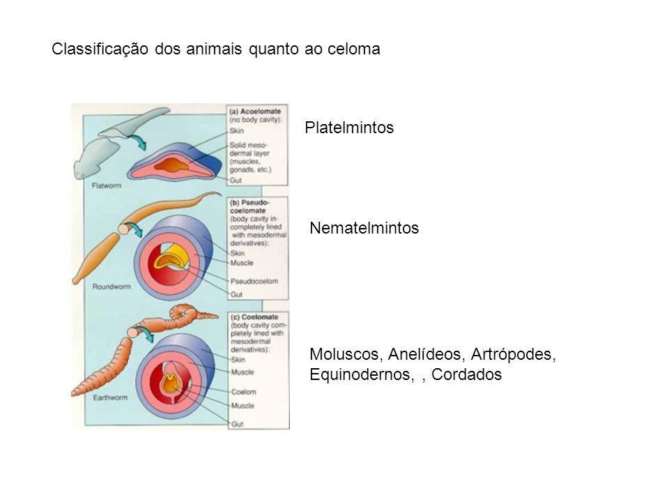 Classificação dos animais quanto ao celoma Platelmintos Nematelmintos Moluscos, Anelídeos, Artrópodes, Equinodernos,, Cordados