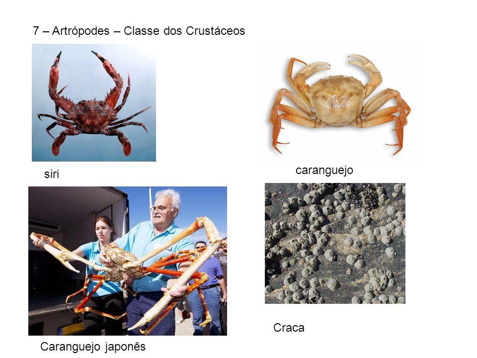 7 – Artrópodes – Classe dos Crustáceos siri caranguejo Caranguejo japonês Craca