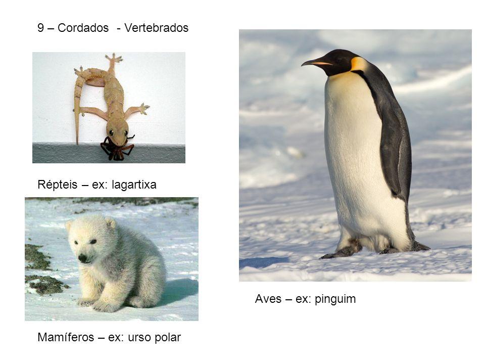 9 – Cordados - Vertebrados Répteis – ex: lagartixa Aves – ex: pinguim Mamíferos – ex: urso polar