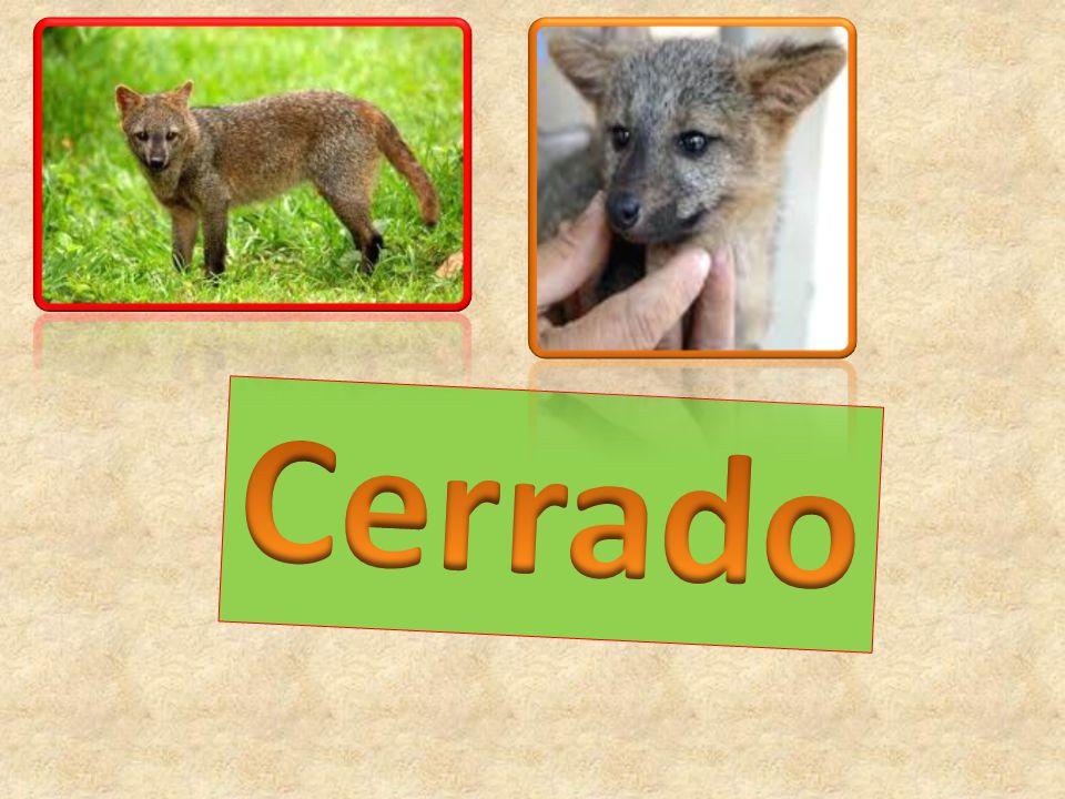 O Cerrado localiza-se na América do Sul, na região centro oeste do Brasil.