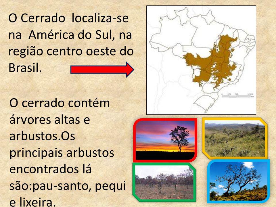 A fauna do Cerrado tem vários tipos de aves,anfíbios, répteis,cupins,abelhas, vespas e borboletas.