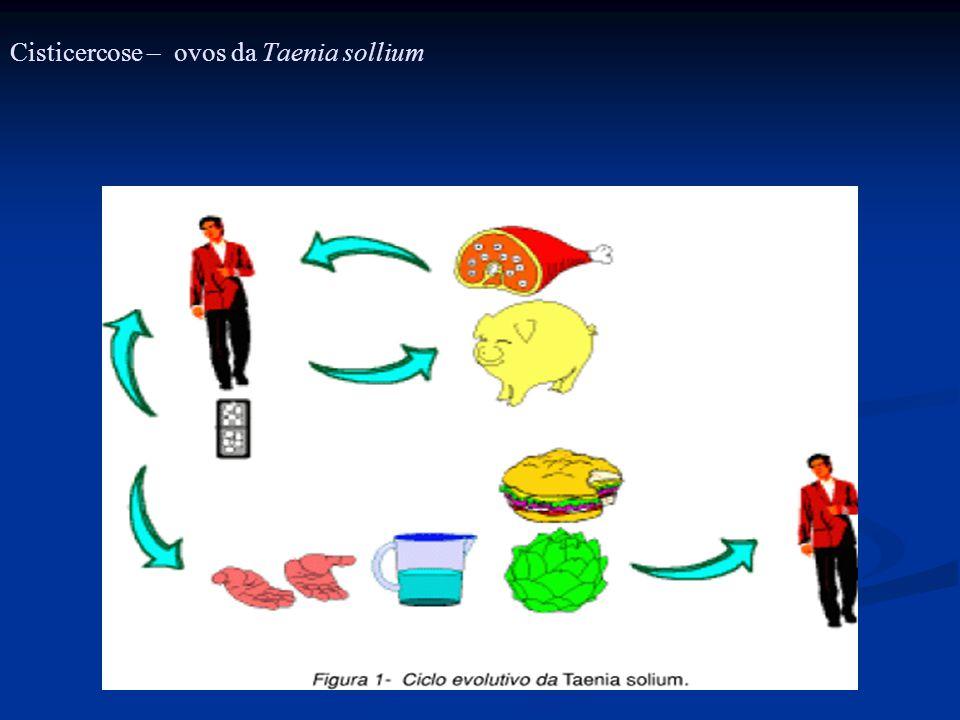 Cisticercose – ovos da Taenia sollium