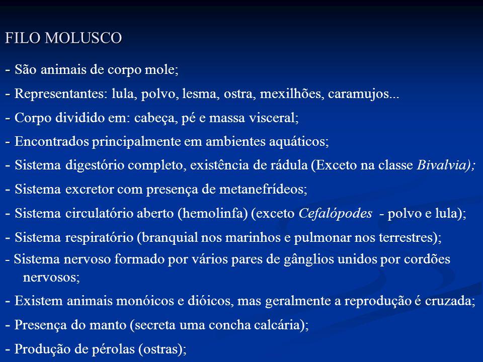 FILO MOLUSCO - - São animais de corpo mole; - - Representantes: lula, polvo, lesma, ostra, mexilhões, caramujos... - - Corpo dividido em: cabeça, pé e