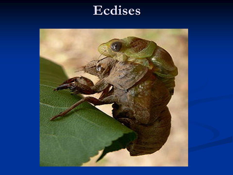 Ecdises