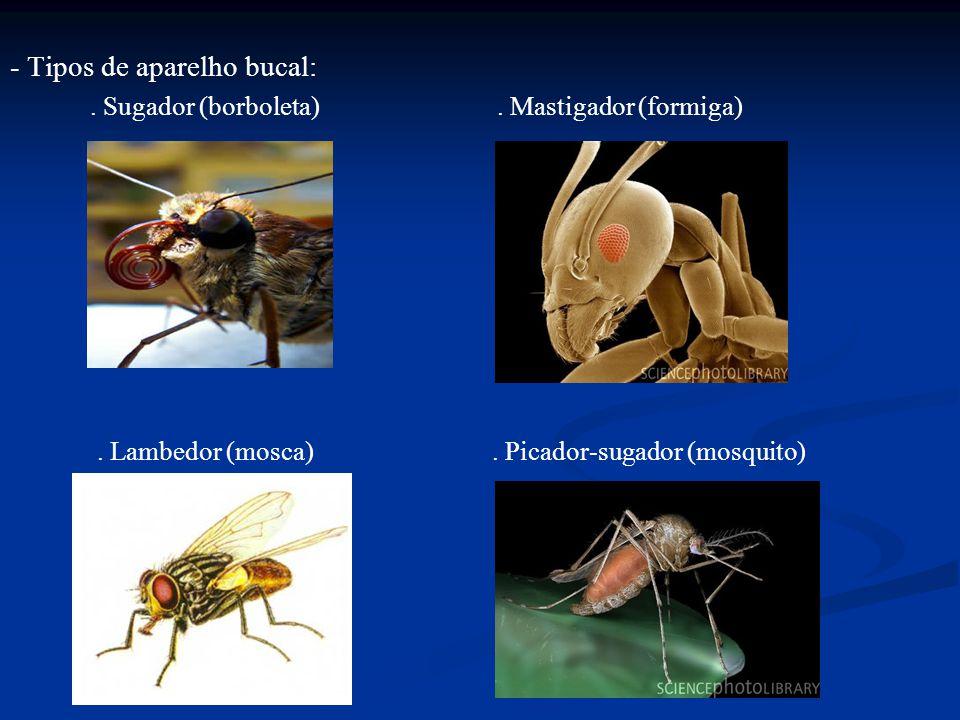 - Tipos de aparelho bucal:. Sugador (borboleta). Mastigador (formiga). Lambedor (mosca). Picador-sugador (mosquito)