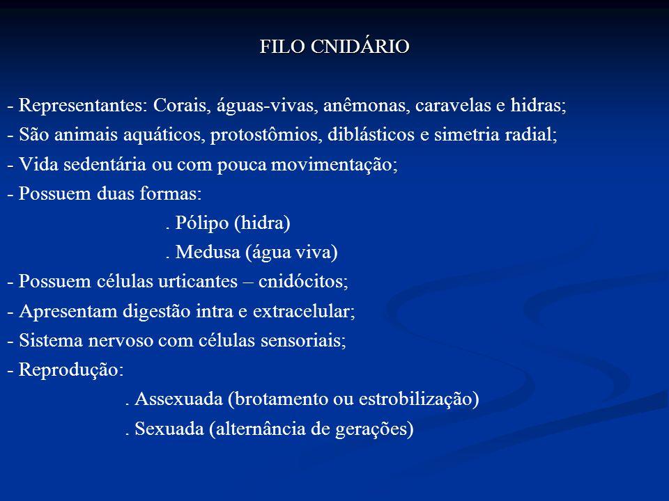 FILO CNIDÁRIO - Representantes: Corais, águas-vivas, anêmonas, caravelas e hidras; - São animais aquáticos, protostômios, diblásticos e simetria radia
