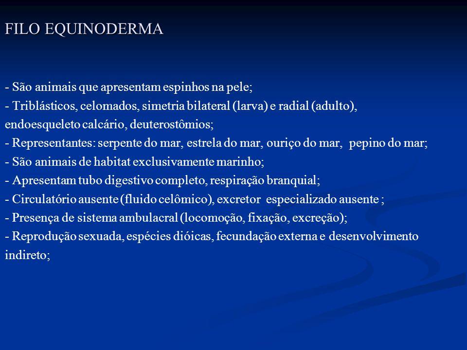 FILO EQUINODERMA - São animais que apresentam espinhos na pele; - Triblásticos, celomados, simetria bilateral (larva) e radial (adulto), endoesqueleto
