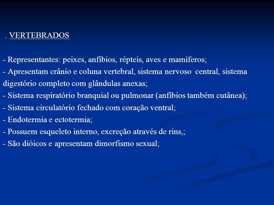 . VERTEBRADOS - Representantes: peixes, anfíbios, répteis, aves e mamíferos; - Apresentam crânio e coluna vertebral, sistema nervoso central, sistema