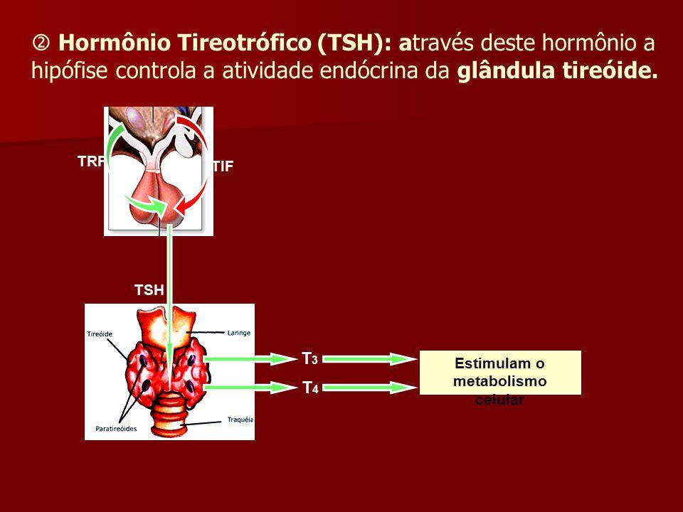  Hormônio Tireotrófico (TSH): através deste hormônio a hipófise controla a atividade endócrina da glândula tireóide. TRF TSH T3T3 T4T4 TIF Estimulam