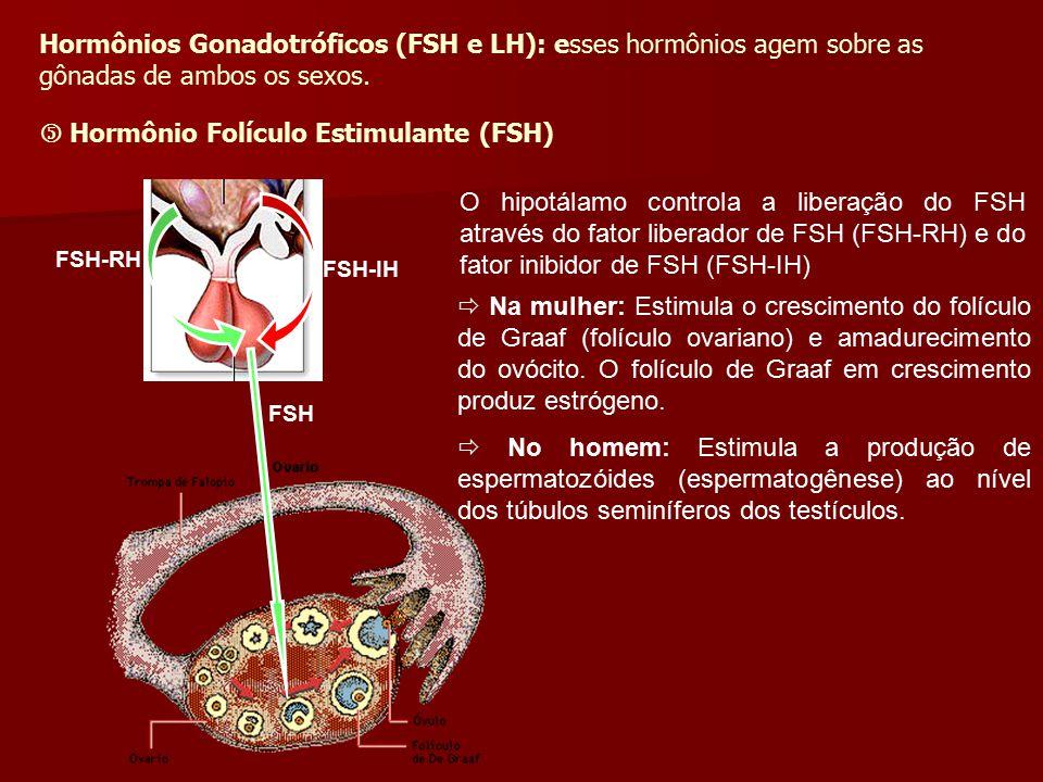 FSH-RH FSH-IH FSH  Na mulher: Estimula o crescimento do folículo de Graaf (folículo ovariano) e amadurecimento do ovócito. O folículo de Graaf em cre