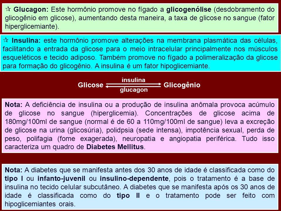  Glucagon: Este hormônio promove no fígado a glicogenólise (desdobramento do glicogênio em glicose), aumentando desta maneira, a taxa de glicose no s