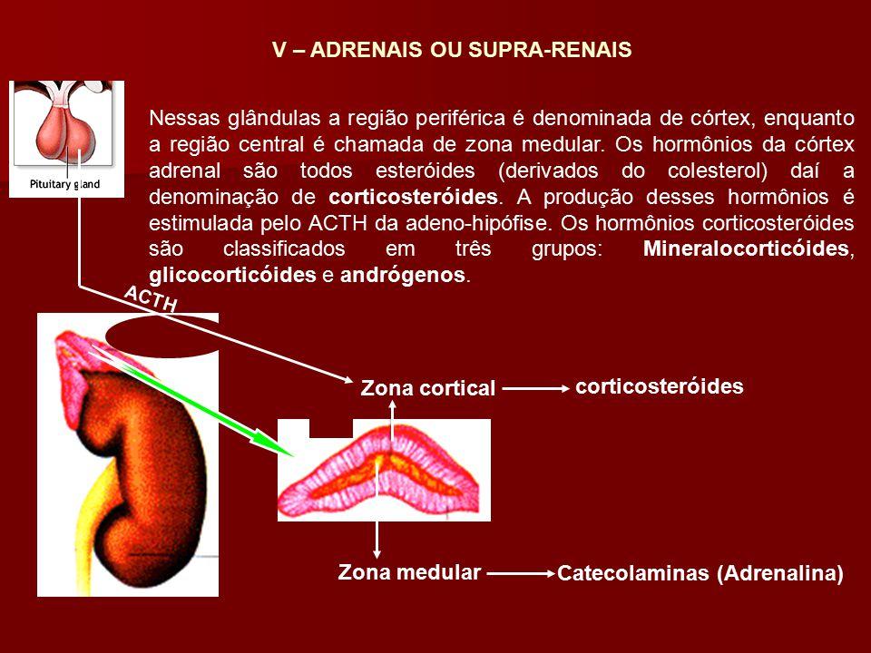 Zona medular Zona cortical Catecolaminas (Adrenalina) corticosteróides ACTH Nessas glândulas a região periférica é denominada de córtex, enquanto a r