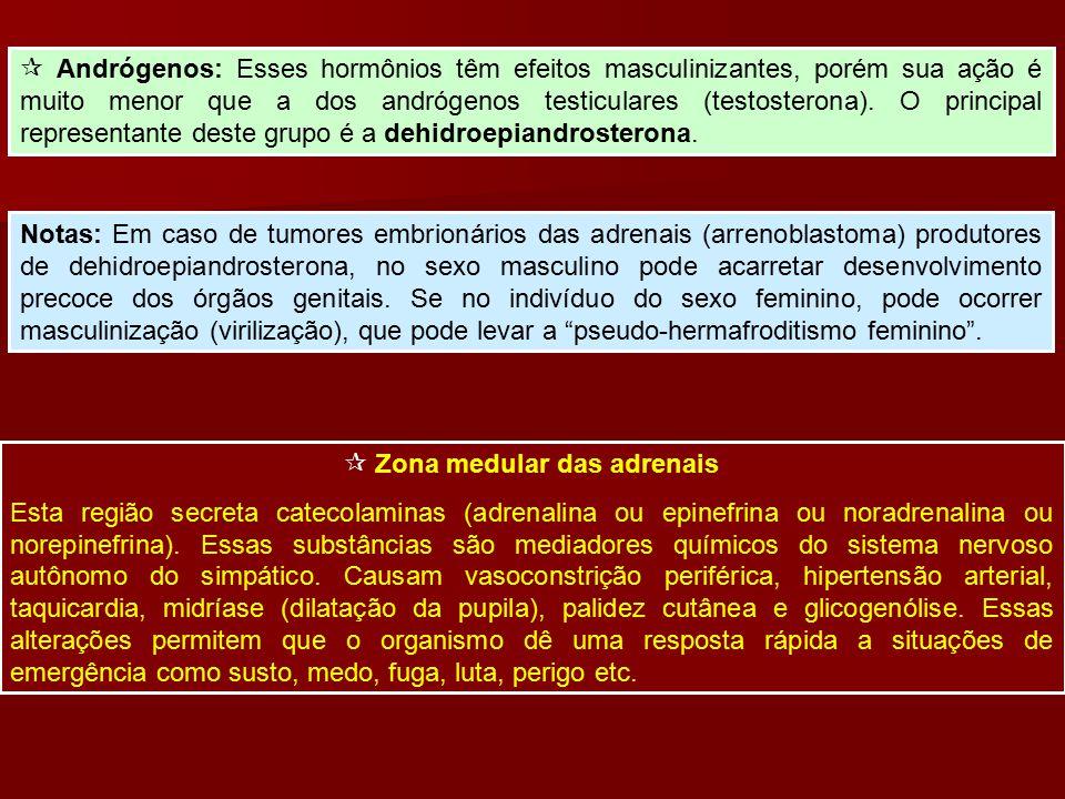  Andrógenos: Esses hormônios têm efeitos masculinizantes, porém sua ação é muito menor que a dos andrógenos testiculares (testosterona). O principal