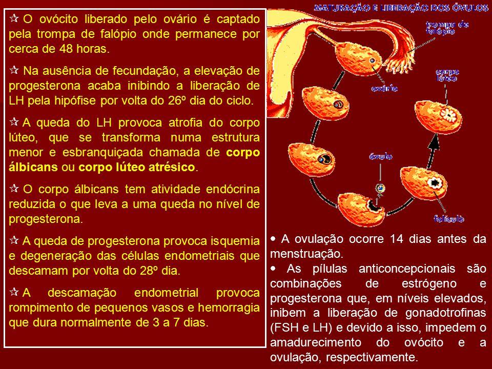  O ovócito liberado pelo ovário é captado pela trompa de falópio onde permanece por cerca de 48 horas.  Na ausência de fecundação, a elevação de pro