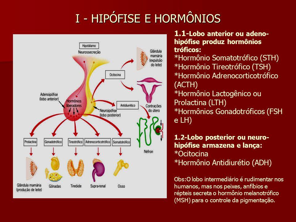 I - HIPÓFISE E HORMÔNIOS 1.1- Lobo anterior ou adeno- hipófise produz hormônios tróficos: *Hormônio Somatotrófico (STH) *Hormônio Tireotrófico (TSH)