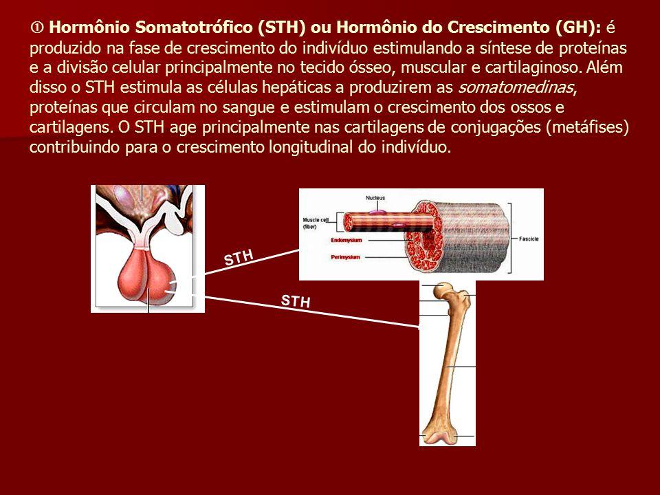 Hormônio Somatotrófico (STH) ou Hormônio do Crescimento (GH): é produzido na fase de crescimento do indivíduo estimulando a síntese de proteínas e a