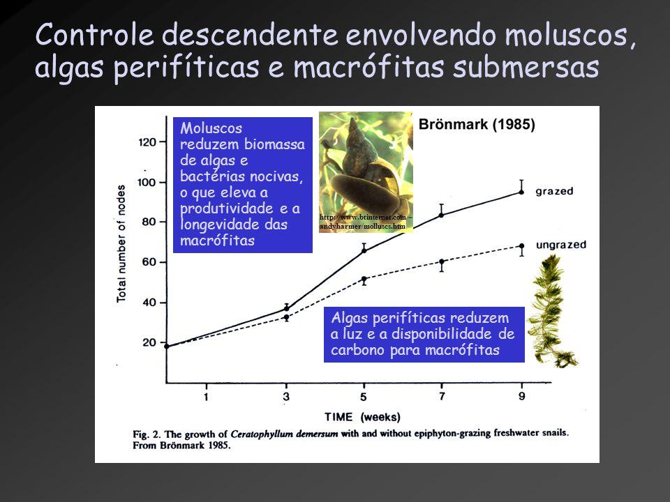 Controle descendente envolvendo moluscos, algas perifíticas e macrófitas submersas http://www.btinternet.com/~ andyharmer/molluscs.htm Algas perifític