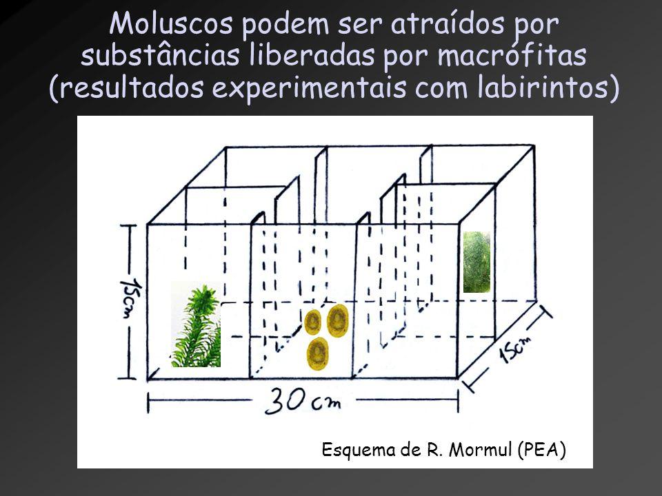 Moluscos podem ser atraídos por substâncias liberadas por macrófitas (resultados experimentais com labirintos) Esquema de R. Mormul (PEA)