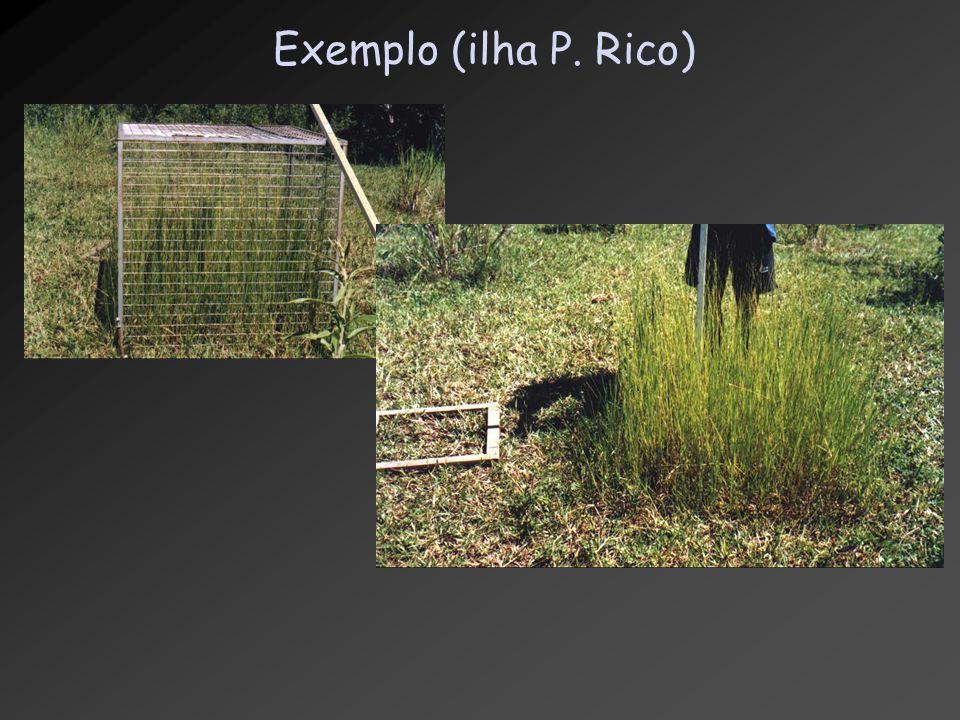 Exemplo (ilha P. Rico)