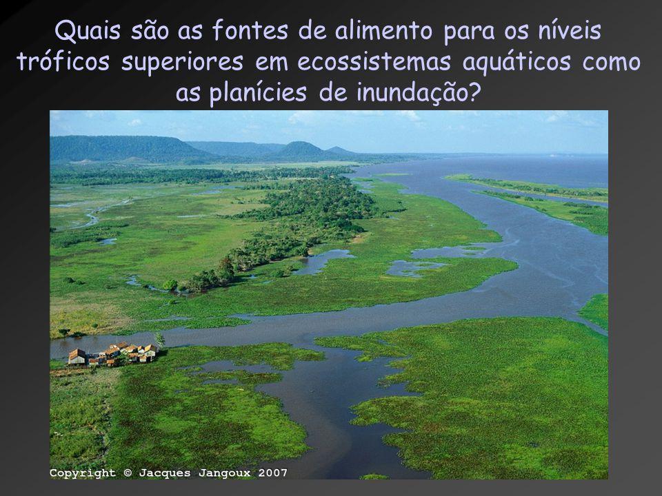 Quais são as fontes de alimento para os níveis tróficos superiores em ecossistemas aquáticos como as planícies de inundação?