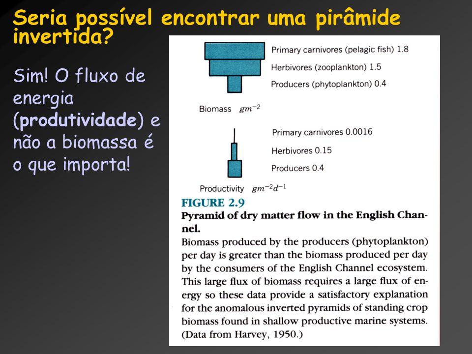 Seria possível encontrar uma pirâmide invertida? Sim! O fluxo de energia (produtividade) e não a biomassa é o que importa!