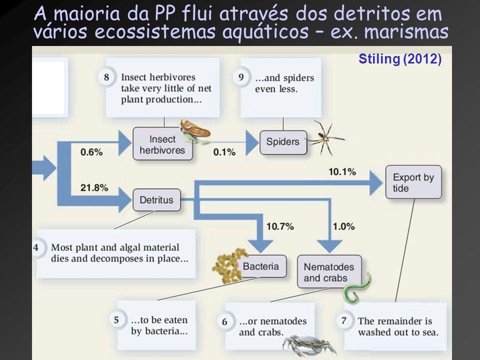A maioria da PP flui através dos detritos em vários ecossistemas aquáticos – ex. marismas Stiling (2012)