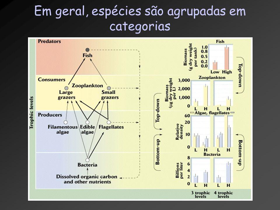 Em geral, espécies são agrupadas em categorias