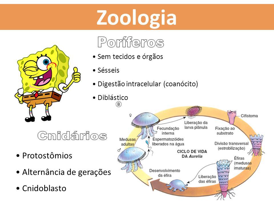 Sem tecidos e órgãos Sésseis Digestão intracelular (coanócito) Diblástico Protostômios Alternância de gerações Cnidoblasto Zoologia