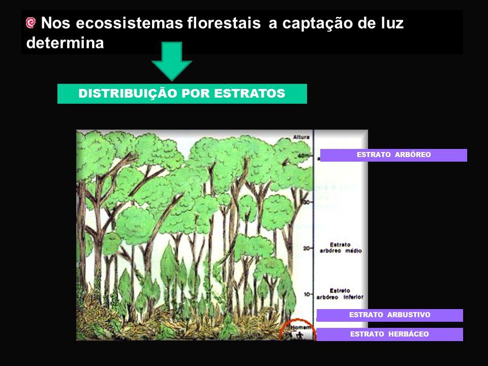 Plantas ESTIOLADAS