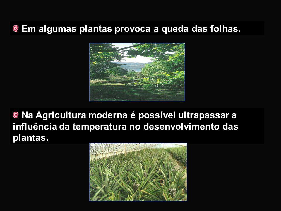 Influencia a germinação das sementes LATÊNCIA - Estado de paragem de desenvolvimento até surgirem melhores condições ambientais INFLUÊNCIA DA TEMPERAT