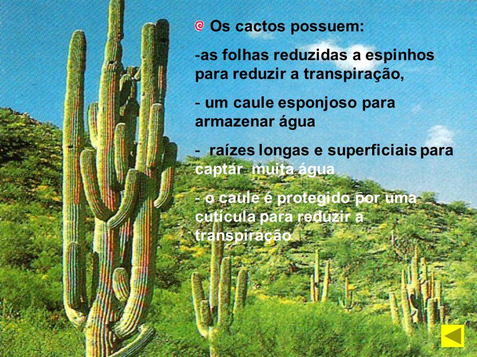 As plantas das regiões tropicais têm folhas largas Transpiração