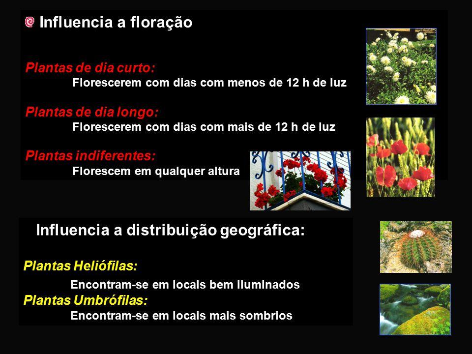 Indispensável à realização da FOTOSSÍNTESE Influencia a época de germinação das sementes INFLUÊNCIA DA LUZ PLANTAS Influencia e direcciona o sentido d