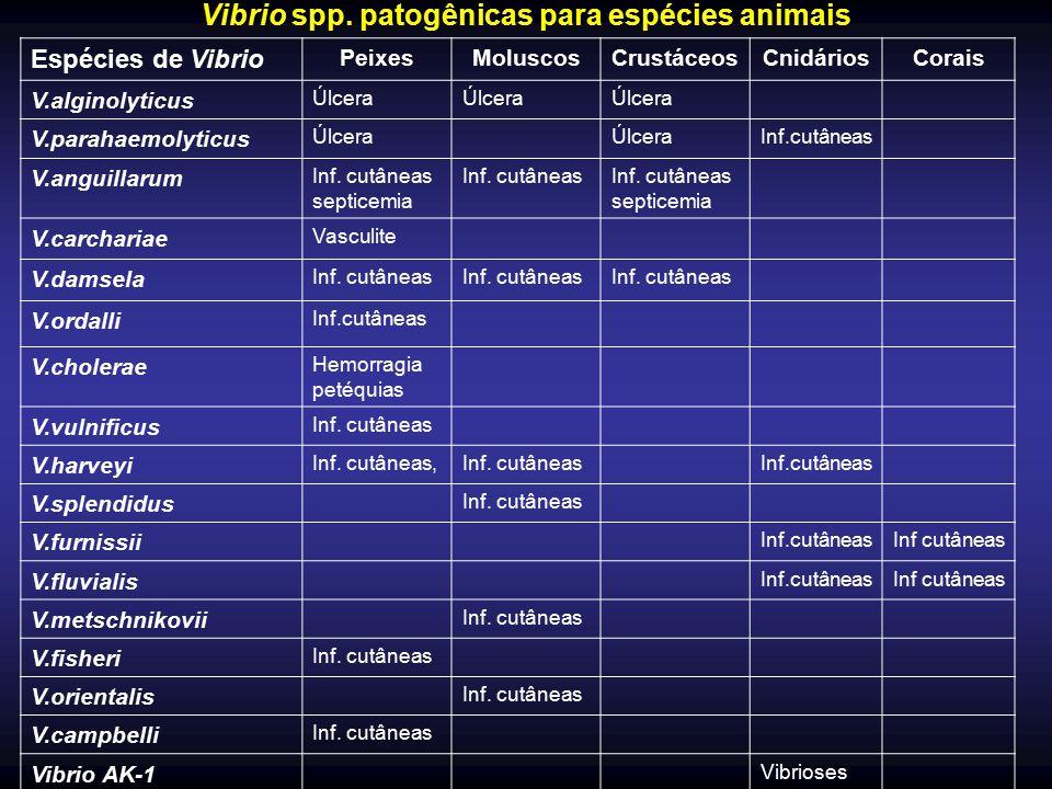 Vibrio spp. patogênicas para espécies animais Espécies de Vibrio PeixesMoluscosCrustáceosCnidáriosCorais V.alginolyticus Úlcera V.parahaemolyticus Úlc