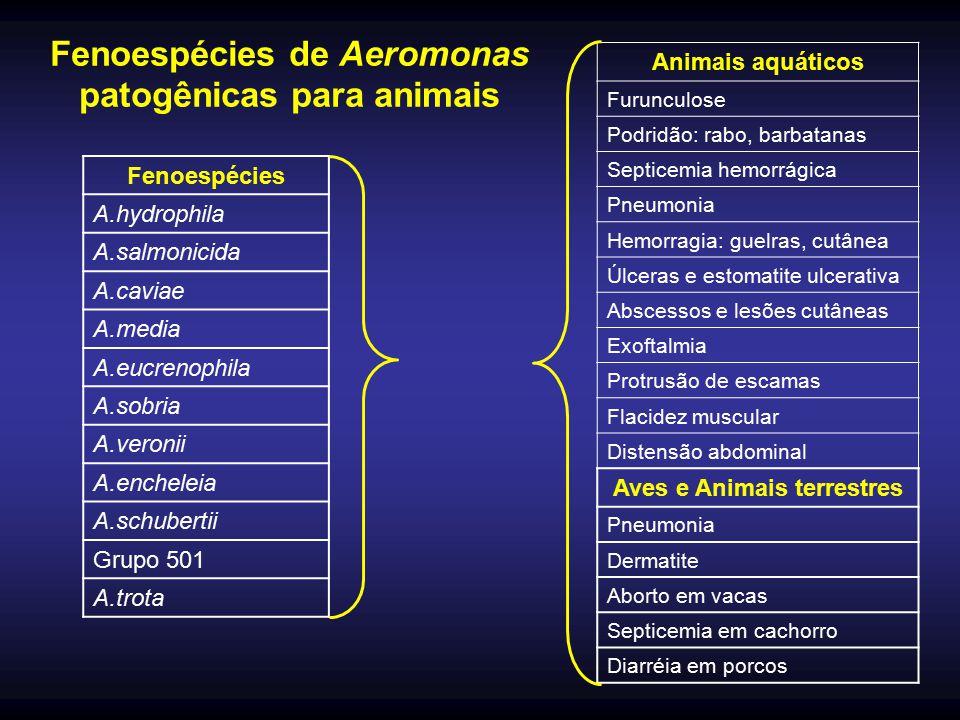 Fenoespécies de Aeromonas patogênicas para animais Fenoespécies A.hydrophila A.salmonicida A.caviae A.media A.eucrenophila A.sobria A.veronii A.enchel