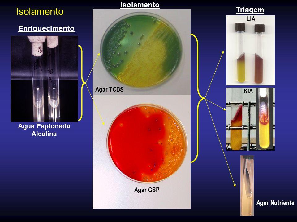 Agua Peptonada Alcalina Agar GSP Agar TCBS Agar Nutriente KIA LIA Enriquecimento Isolamento Triagem Isolamento