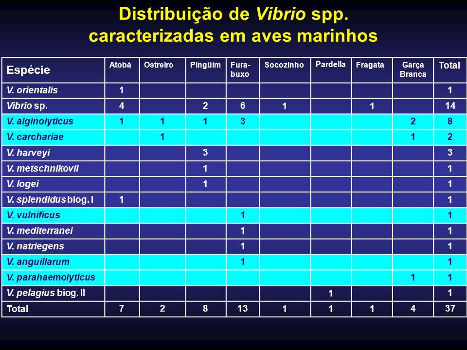 Distribuição de Vibrio spp. caracterizadas em aves marinhos Espécie AtobáOstreiroPingüimFura- buxo SocozinhoPardellaFragataGarça Branca Total V. orien